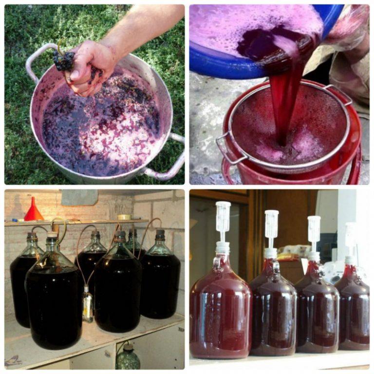 Бизнес изготовления домашнего вина