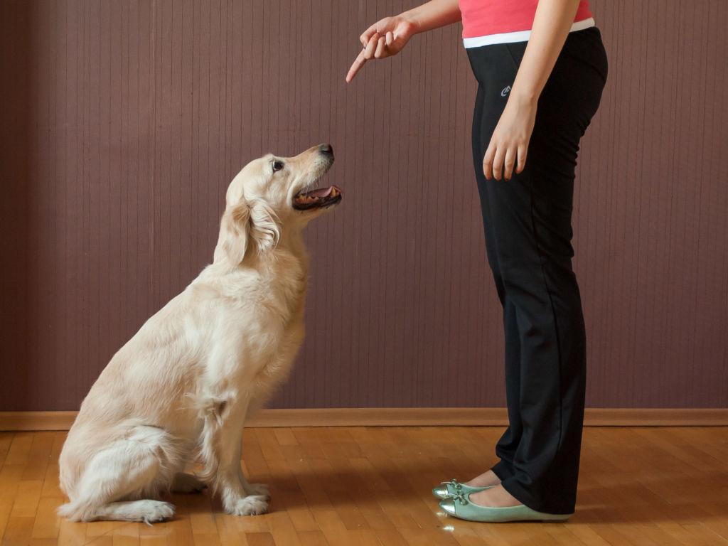 Бизнес дрессировка собак различных пород и размеров